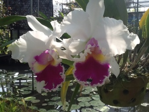 Orchid garden on the motor bike ride