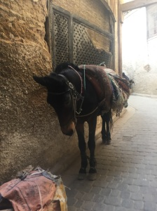 Thankfully Katy was not interested in a mule, they are used to carry goods through the medina
